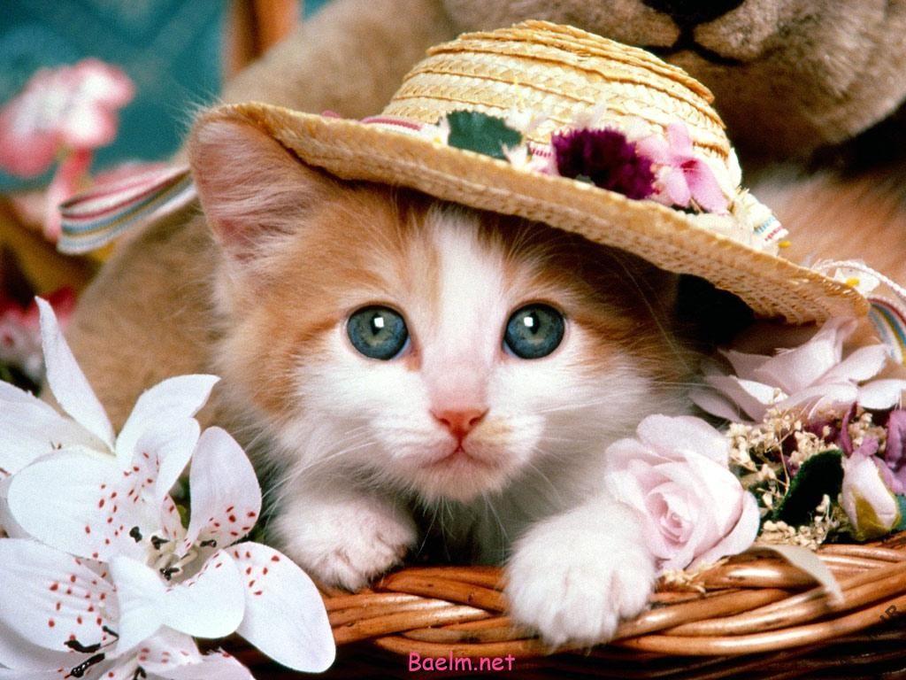 در دوران بارداري از گربه دوري كنيد