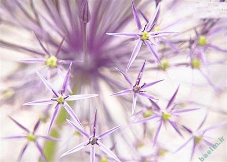 گل و گياه | تصاوير زيبا از گياهان جالب و عجيب