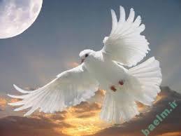 تعبیر خواب | تعبیر دیدن کبوتر در خواب