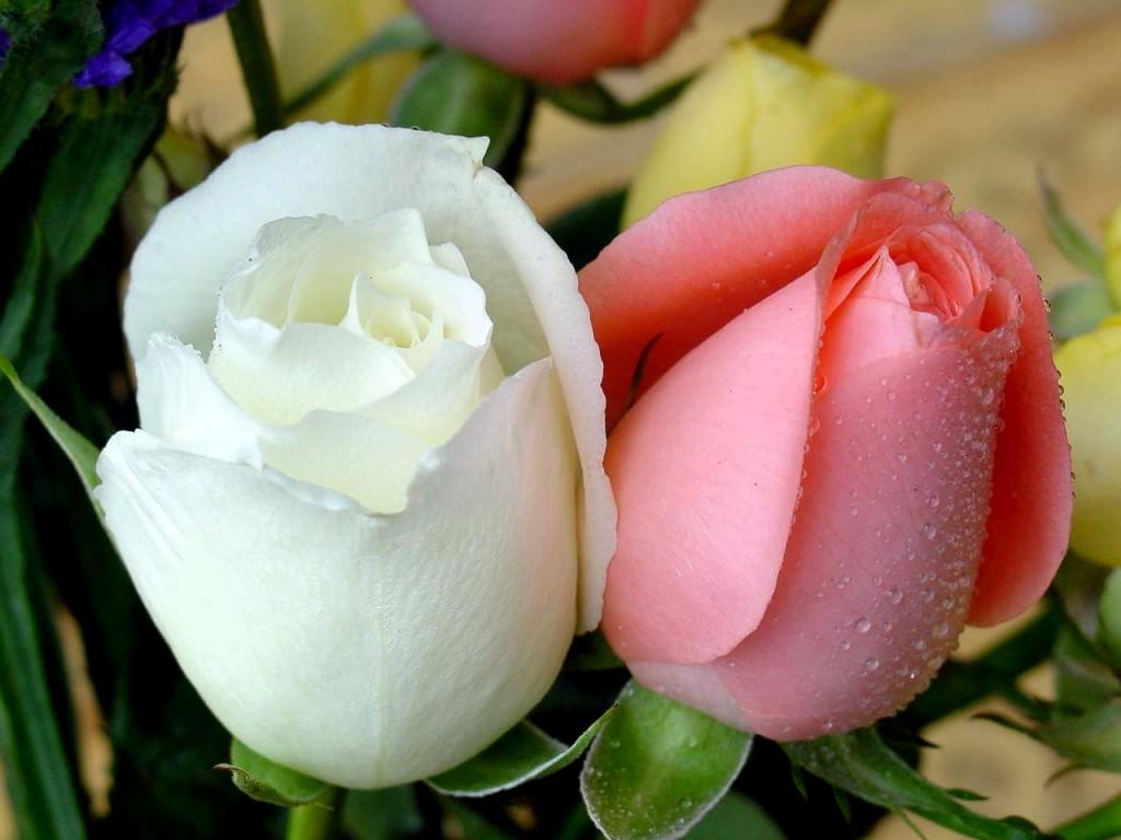 تعبیر خواب | تعبیر دیدن گل در خواب