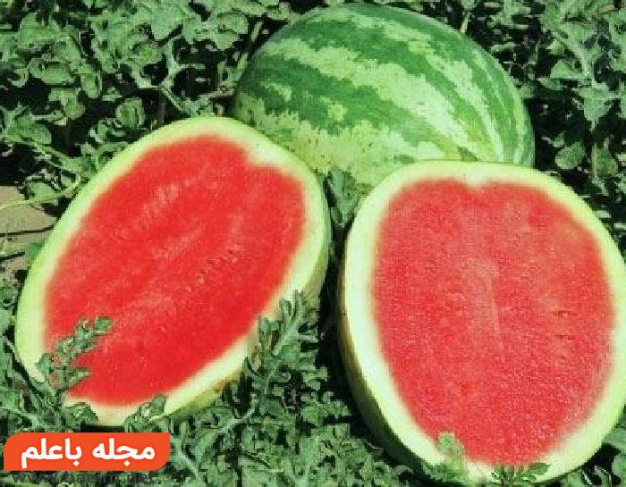 روش کاشت هندوانه,آموزش کاشت هندوانه در خانه و مزرعه,زمان برداشت و آفات گیاه هندوانه