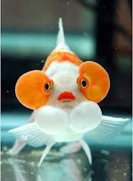 تعبیر خواب | تعبیر دیدن ماهی در خواب