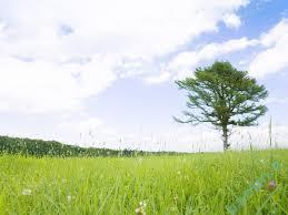 تعبیر خواب   تعبیر دیدن سبزه در خواب