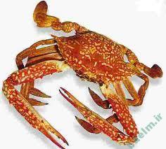 تعبیر خواب | تعبیر دیدن خرچنگ در خواب