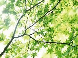 تعبیر خواب   تعبیر دیدن شاخه درخت در خواب