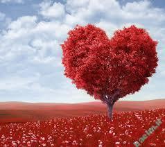 تعبیر خواب عاشقانه | تعبیر خواب دیدن عاشق یا عاشق شدن بر کسی که نمیشناسیش