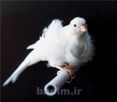 canary9.jpg