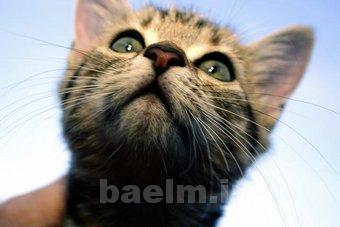 cat_behaviour1.jpg
