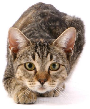 cat_behaviour11.JPG