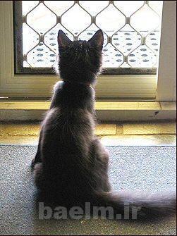 cat_behaviour5.jpg