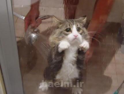 گربه | درباره خصوصيات رفتاري گربه ها بيشتر بدانيم
