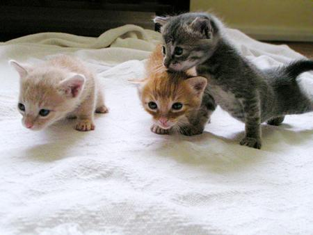 cat_keeping1.jpg