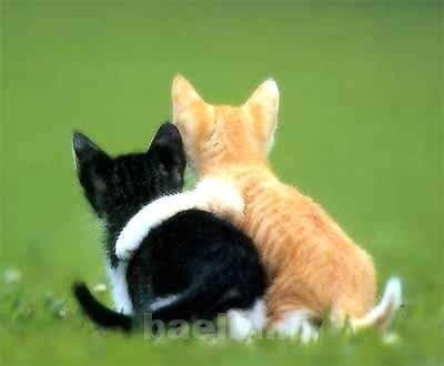 گربه | اگر گربه خانگي داريد به اين نكات توجه كنيد