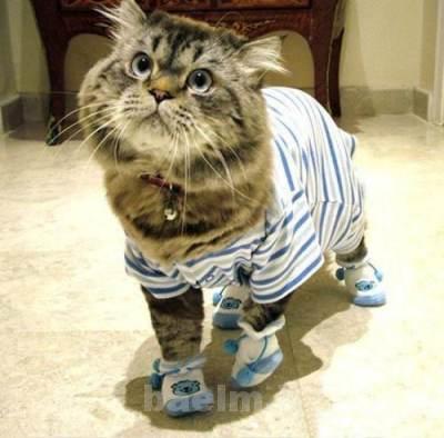 cat_keeping7.jpg