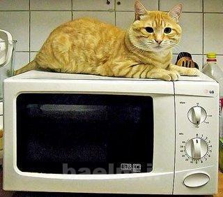cat_nutrition13.jpg