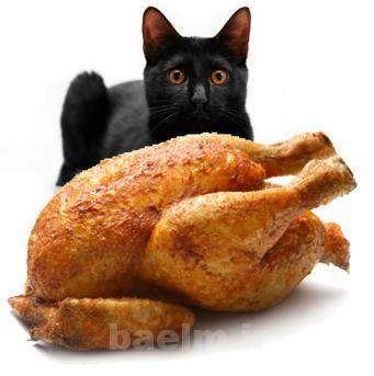 cat_nutrition8.jpg