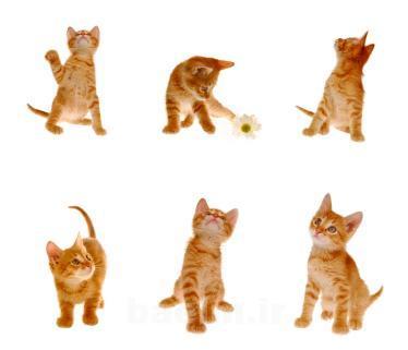 cat_training12.jpg