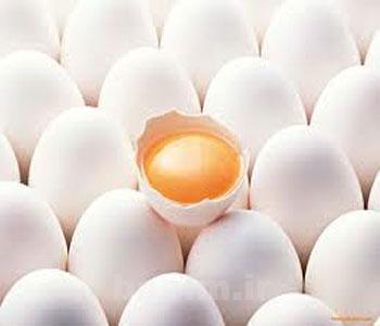 تغذیه و سلامتی | آشنایی با ارزش غذایی و خواص مفید تخم مرغ