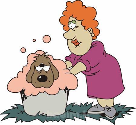 سگ   اقدامات لازم جهت حفظ سلامت پوست و موي سگ