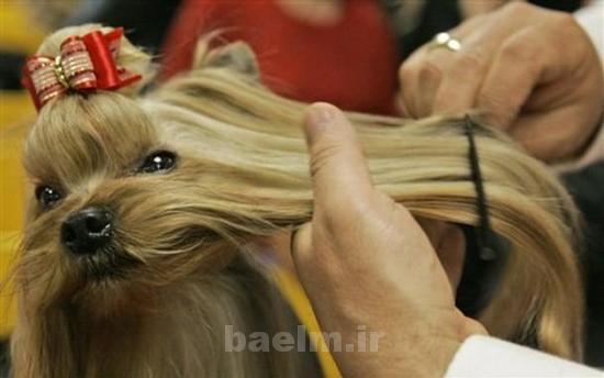 grooming18.jpg