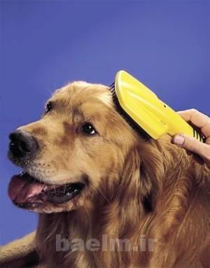 grooming20.jpg