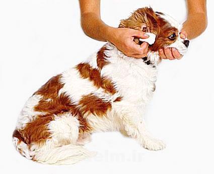 grooming25.jpg