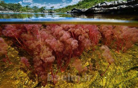 مکان های دیدنی    تصاویر رودخانه 5 رنگ در کلمبیا (بسیار زیبا)