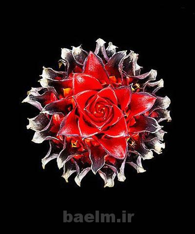 عكس | تصاوير گل هاي  زيبا ،عجيب و شگفت انگيز جهان