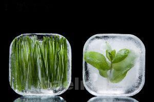 یک روش ساده برای رفع بوی انجماد سبزیجات یخ زده