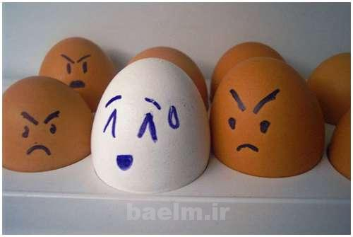 Funny-and-Clever-Egg-Photography-12