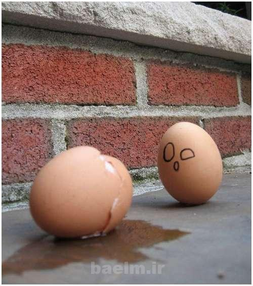 Funny-and-Clever-Egg-Photography-18