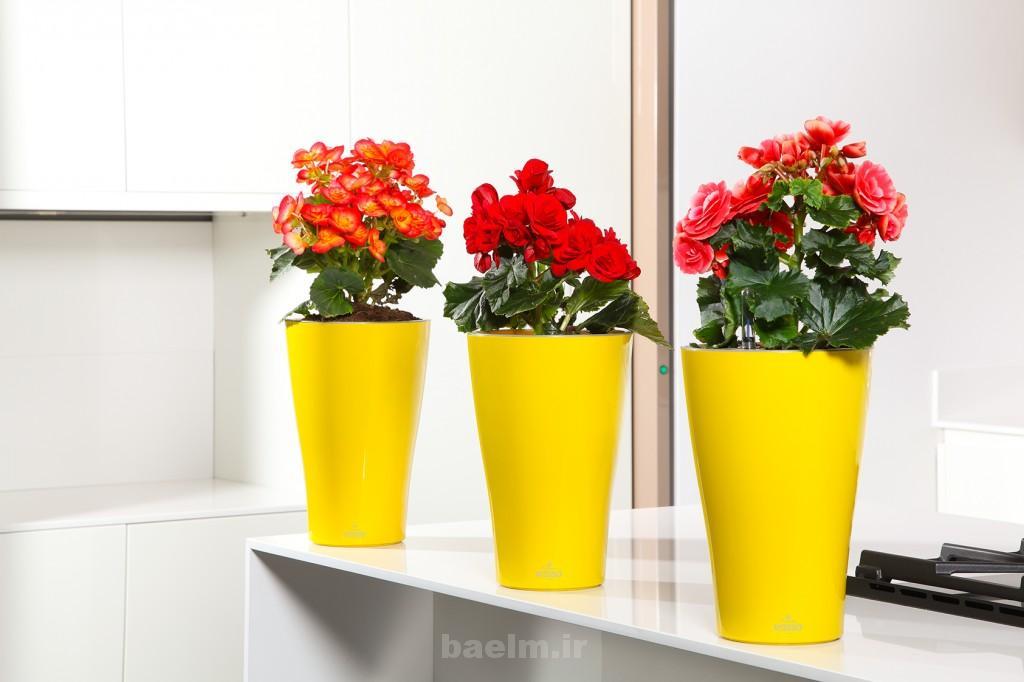 beautiful flower pots 3 1024x682 Beautiful Flower Pots