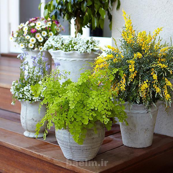 مد | عکس هایی از طراحی های جالب گلدان گل