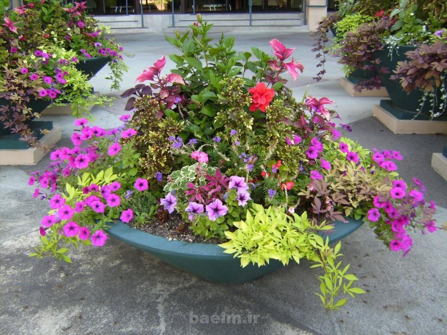 beautiful flower pots 7 Beautiful Flower Pots