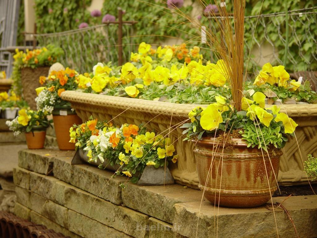 beautiful flower pots 8 1024x768 Beautiful Flower Pots