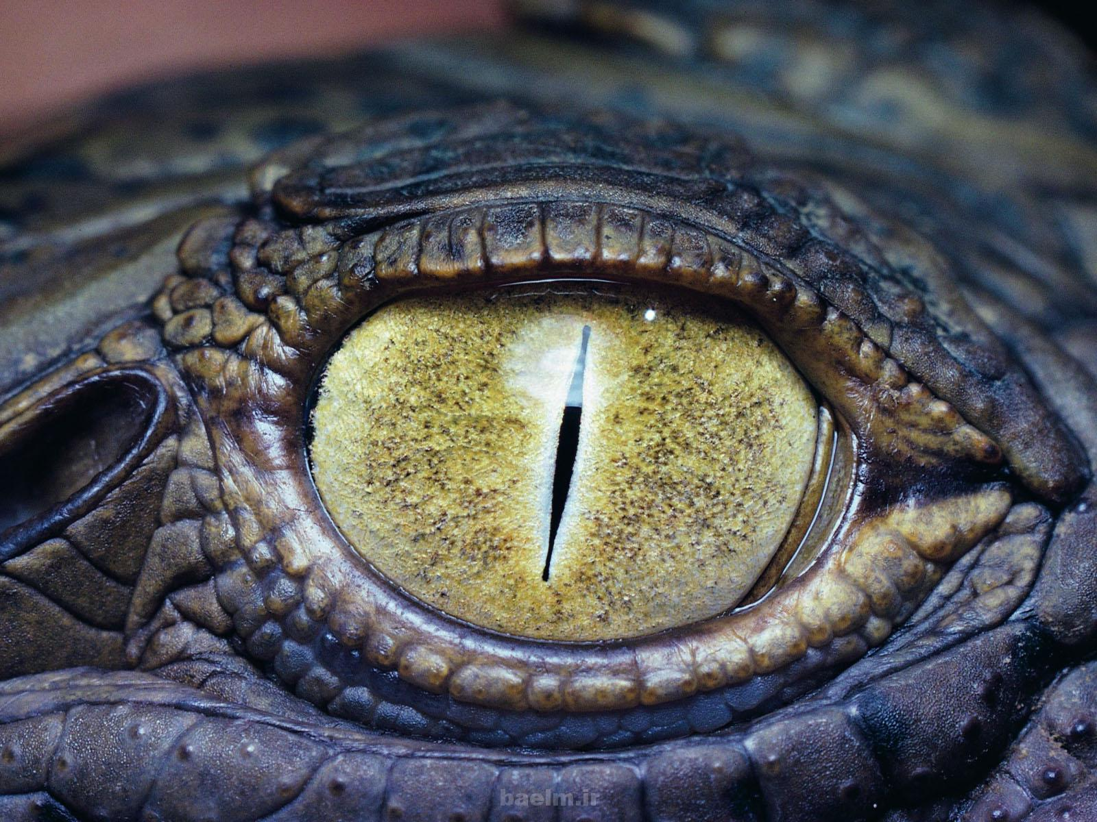 عکسهایی از تمساح ترسناک ترین حیوان دریاها و خشکی ها