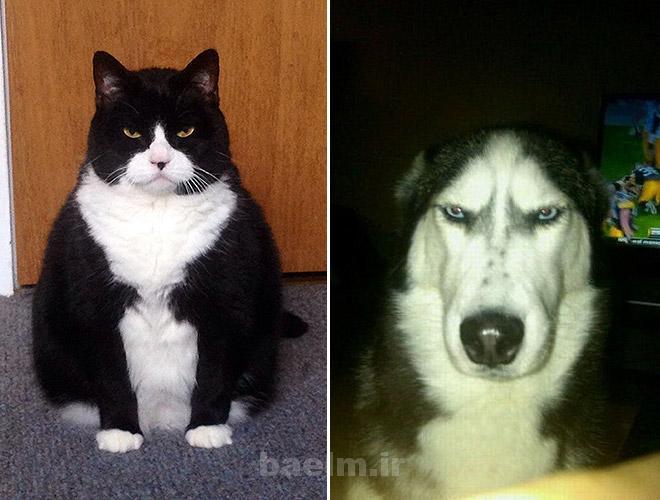 دیدنیها | عکس هایی خنده دار از عصبانیت حیوانات(خیلی جالب)