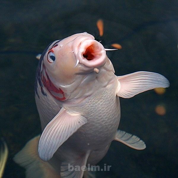 دیدنیها | عکس هایی از ماهی های زیبا و بانمک