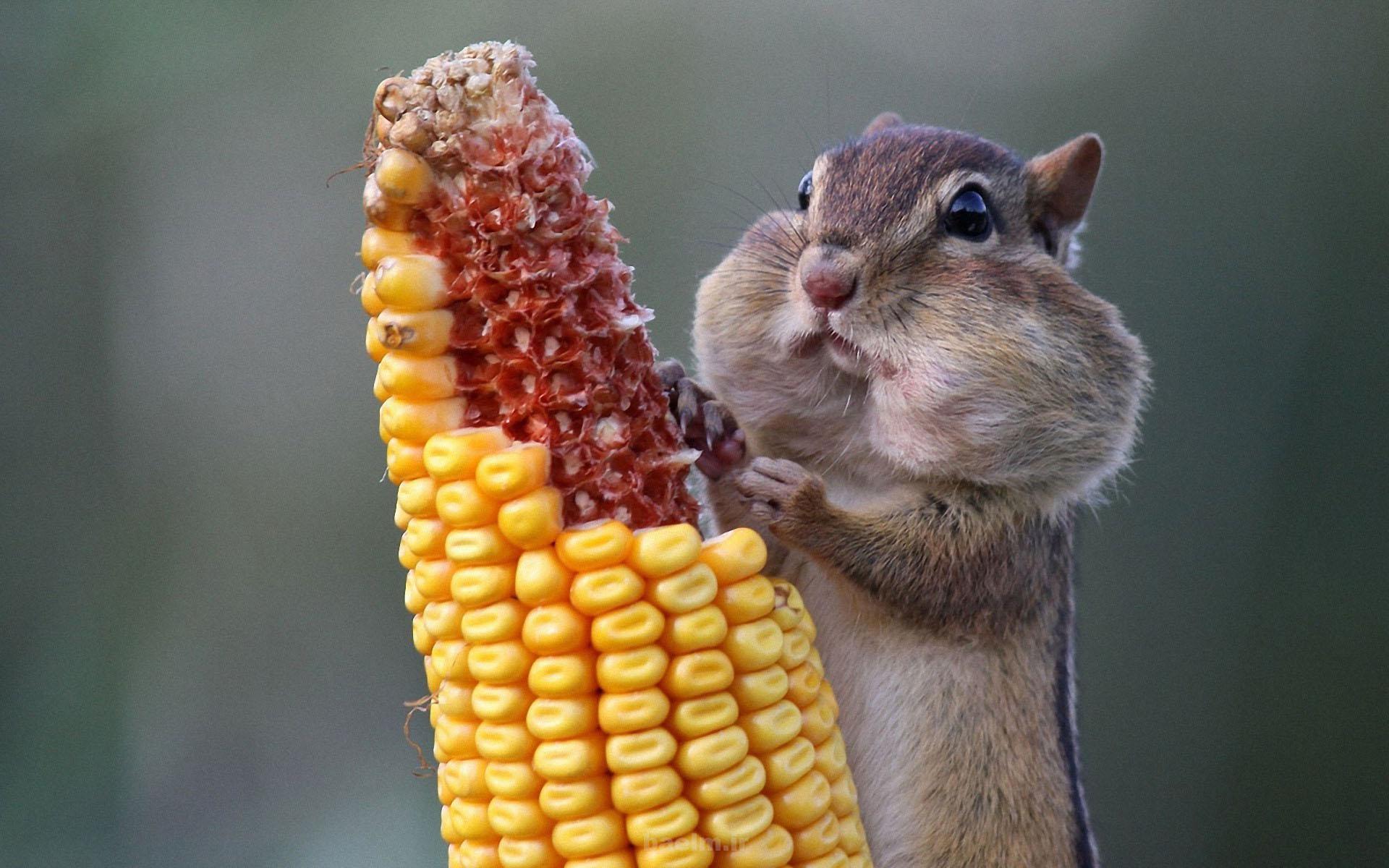 دیدنیها | عکس هایی بسیار بامزه از سنجاب(جالب)