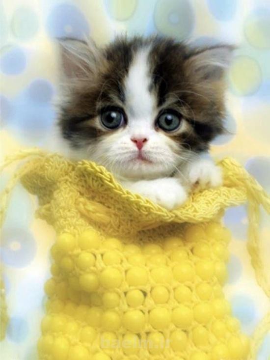 دیدنیها | عکس هایی جالب از گربه های بانمک و بامزه
