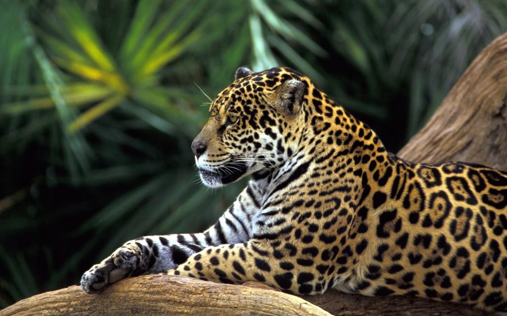 wild animals 1 1024x640 Wild Animals