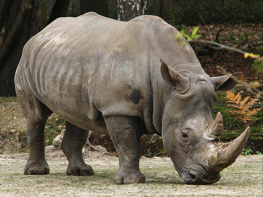 wild animals 11 Wild Animals