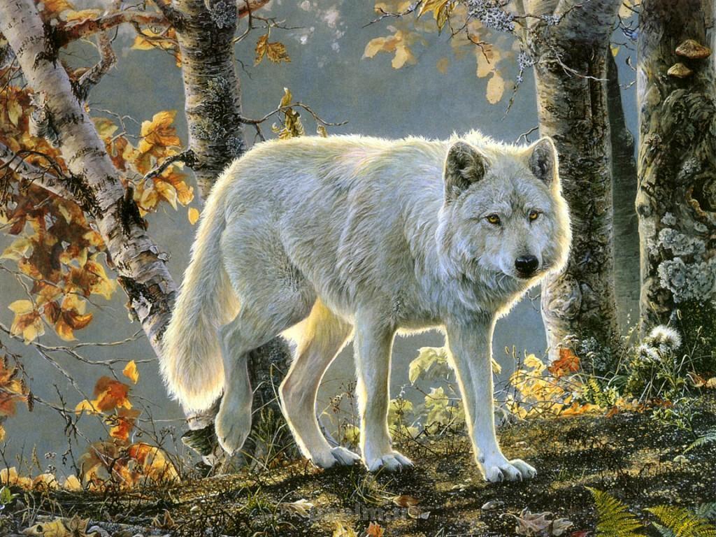 wild animals 13 1024x768 Wild Animals