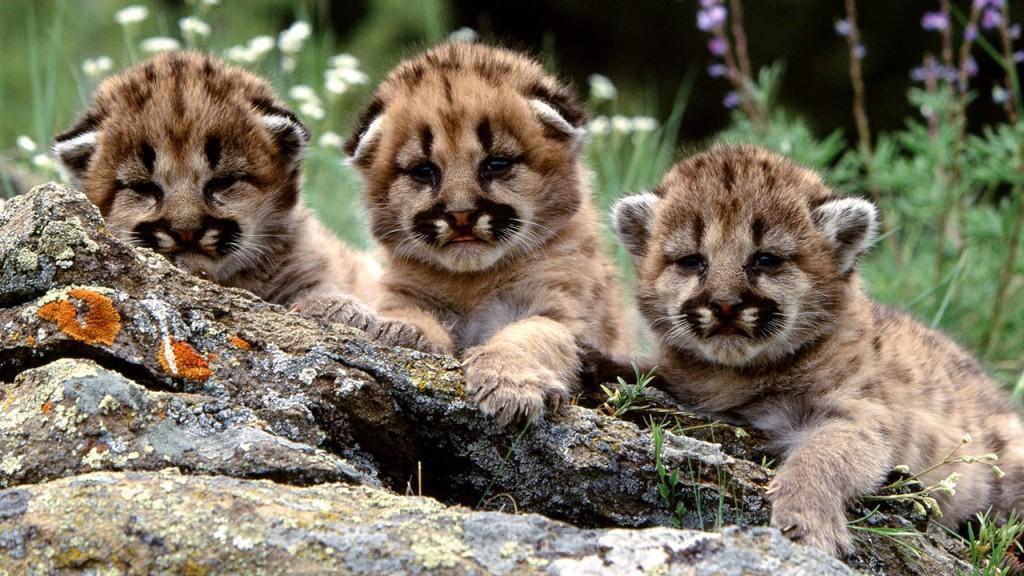 wild animals 14 1024x576 Wild Animals
