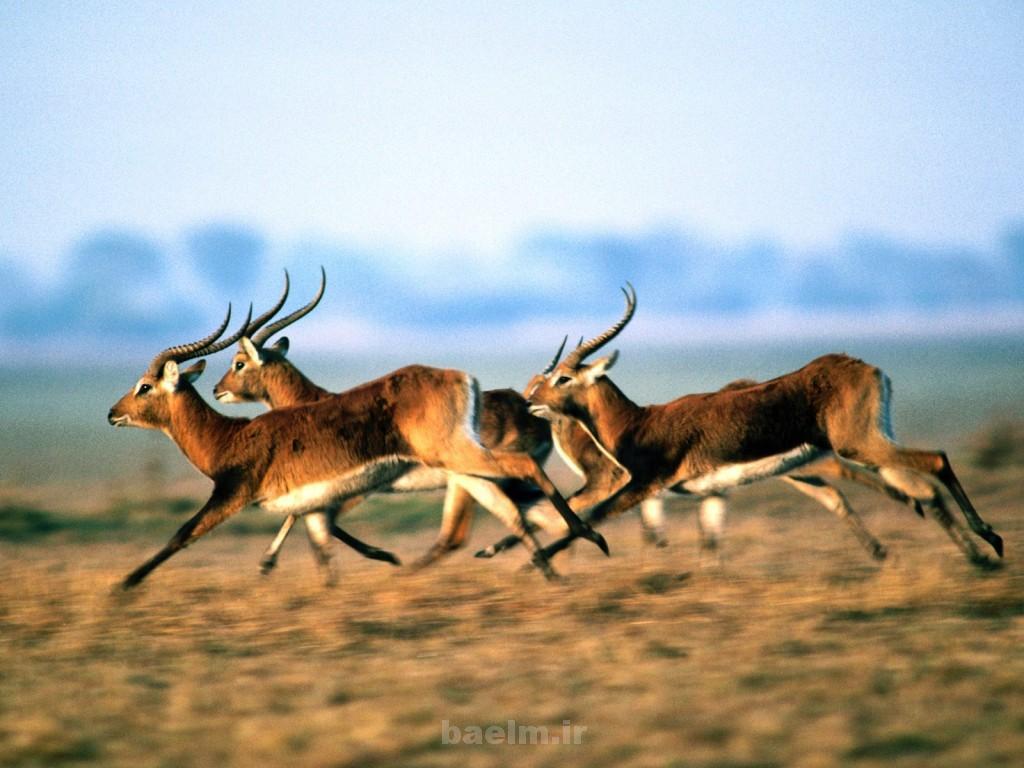 wild animals 2 1024x768 Wild Animals
