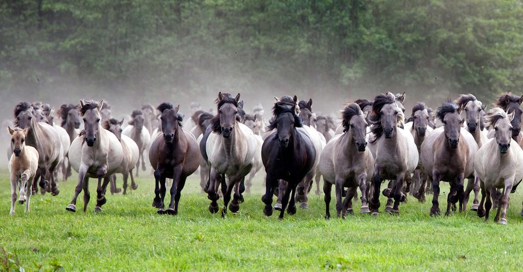 wild horses 10 Wild Horses