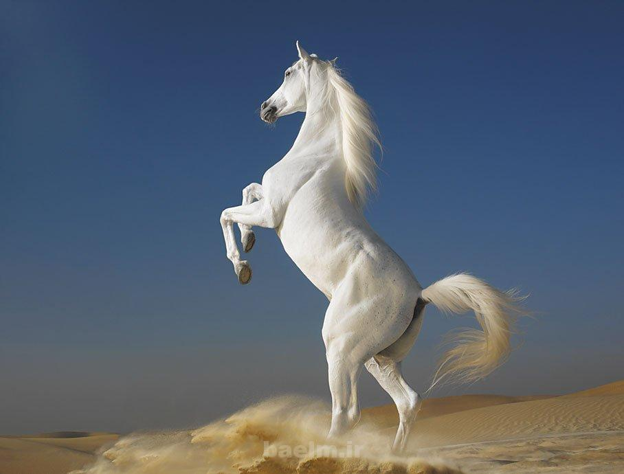 wild horses 11 Wild Horses