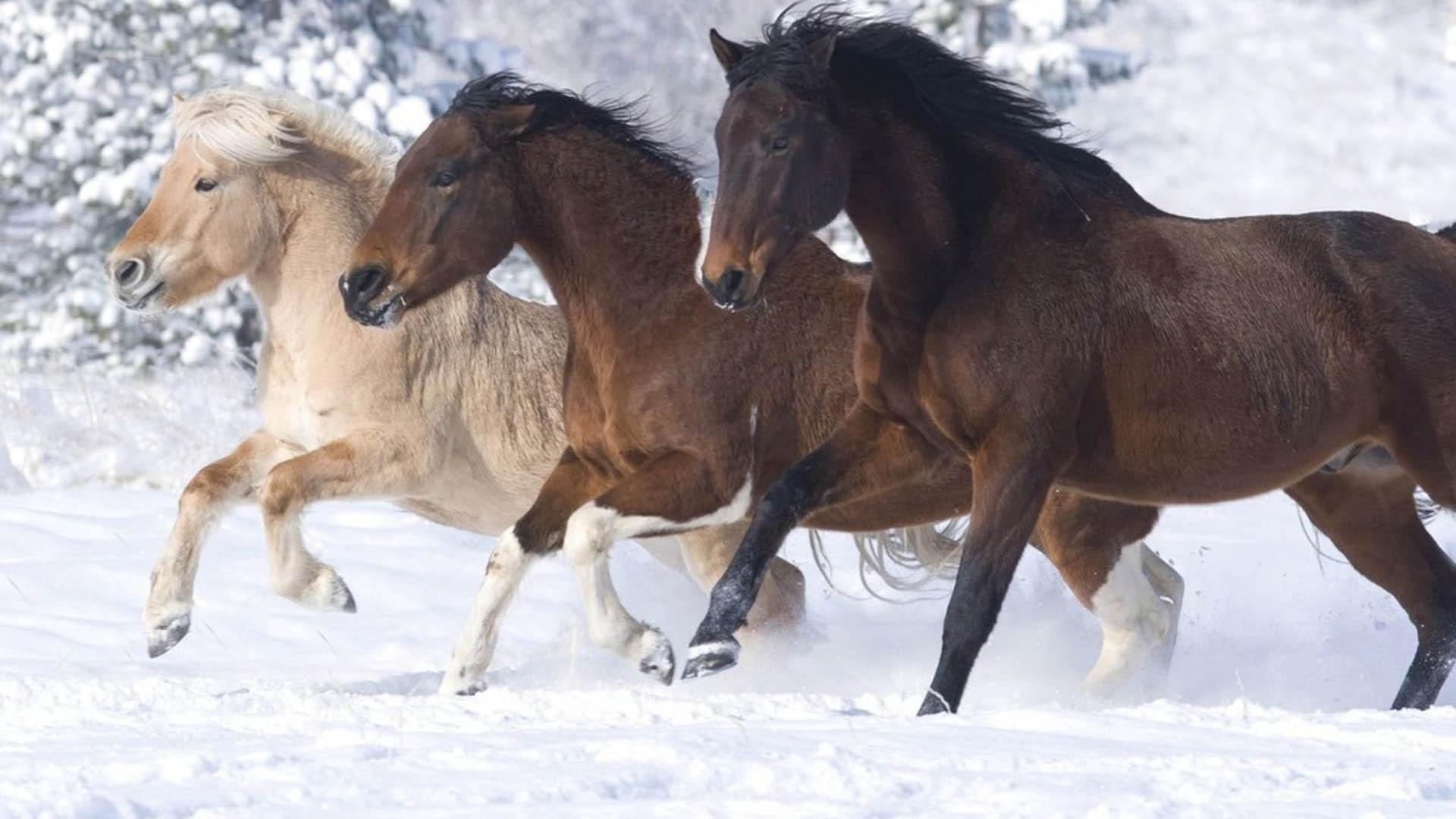 wild horses 14 Wild Horses