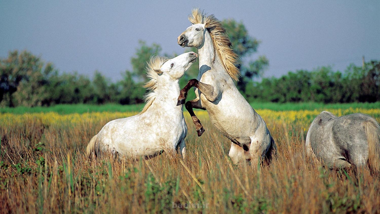 wild horses 18 Wild Horses