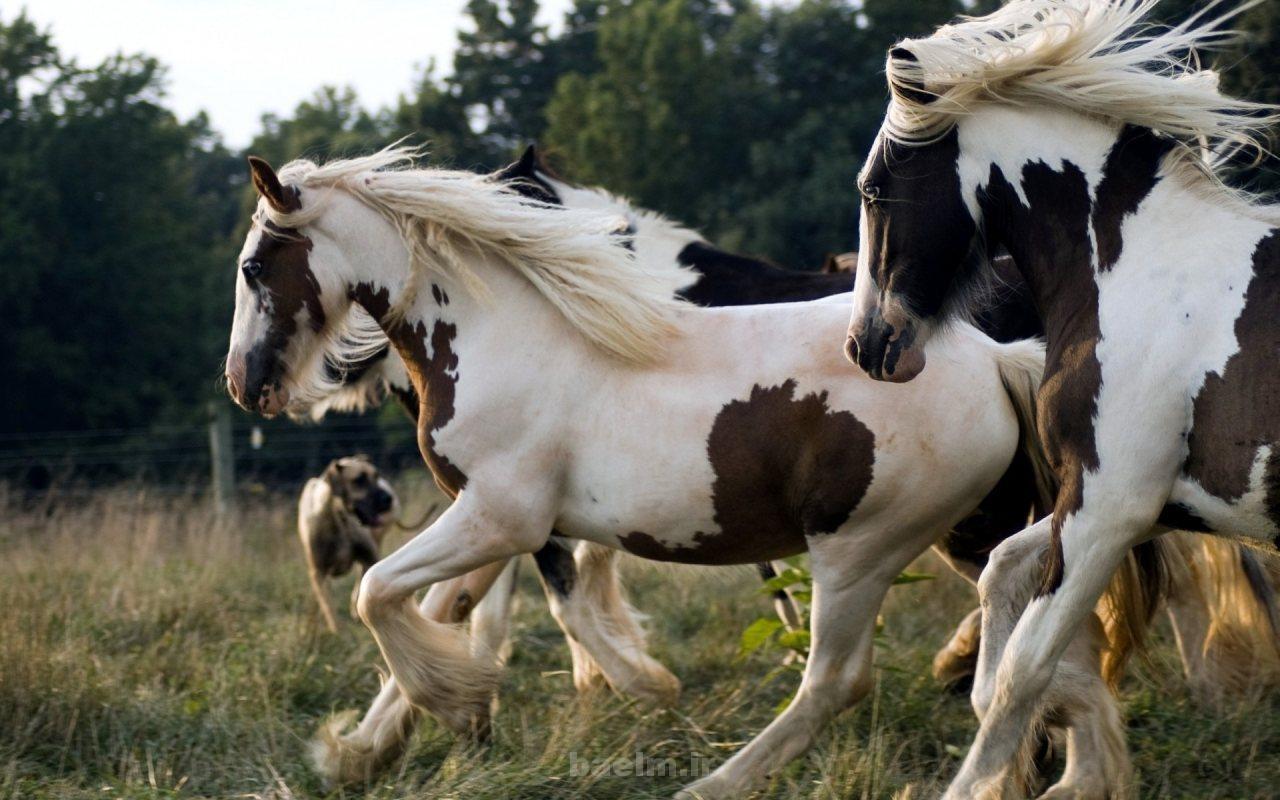 wild horses 20 Wild Horses